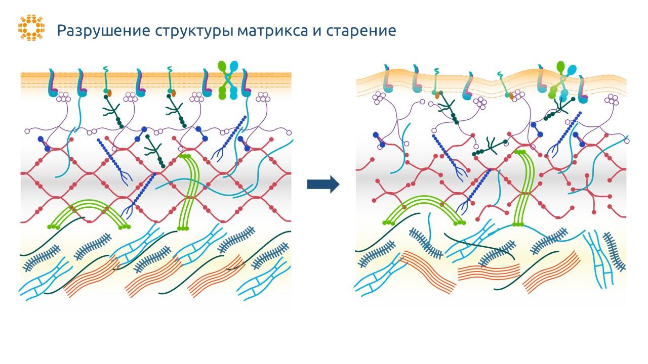 Нарушение структуры матрикса